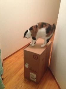 Cora, Queen of he Box