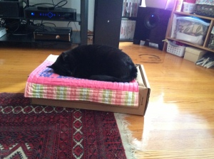 Tali loves her cat mat!