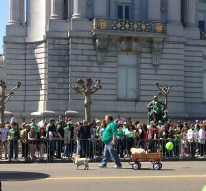 Pug parade!