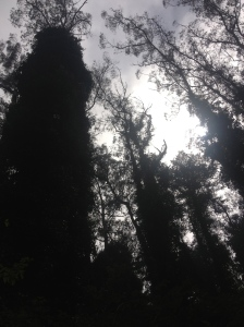 The Amateur Librarian // City Sights: Mount Sutro Cloud Forest