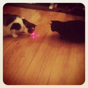 Laser pointer fun