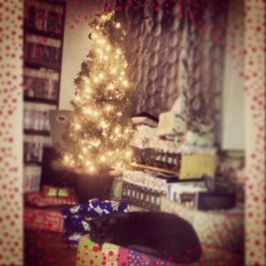 Tali loves Christmas!