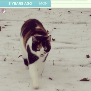 Timehop from 3 years ago... Cora the snowbeast!  We had quite a few snow days in MS that year.