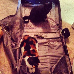 Two little things don't like it when the suitcase comes out.