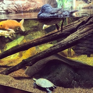 The Amateur Librarian // Chattanooga, TN Aquarium