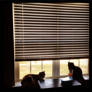 Neighborhood watch on patrol!