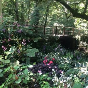 The Amateur Librarian // Natural Bridge AL