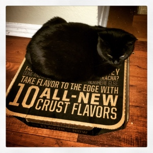 Tali finds the strangest sleeping spots... like this pizza box