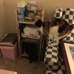 The Amateur Librarian // Meow Monday