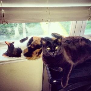Window buddies.