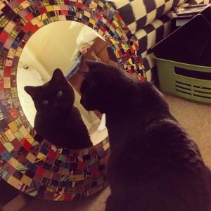Tali loves mirrors.