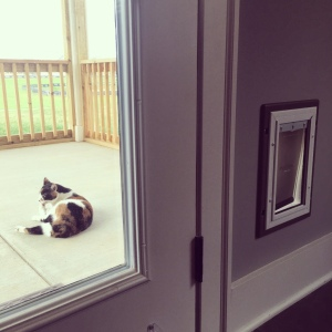 Big moment for the cats: first cat door installed, one step closer to freedom!