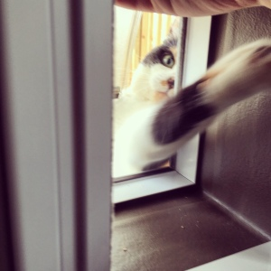 Learning how to use the cat door, on the other hand... went really well, obviously.